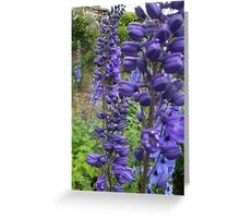 Delphiniums #2 in Harmony Garden Greeting Card
