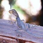 Liz the baby waterdragon Lizard just Lolling about waiting for morning tea... by Virginia McGowan