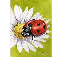 Ladybird on Daisy Photographic Print