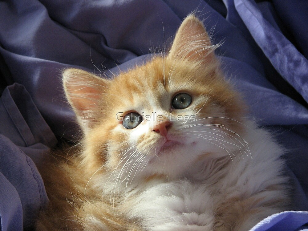 Cute baby Ginger Megs! by Gabrielle  Lees