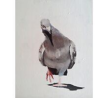 Funky Pigeon Photographic Print