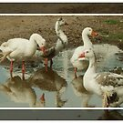 Geese Having a Gander! by Gabrielle  Lees