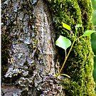 Nature3 by crashbangwallop