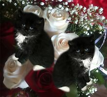 ADORABLE KITTENS AND ROSES,PILLOWS,TOTE BAG,SCARF,SKIRT,TRAVEL MUGS,TOTE BAG,ECT.. by ✿✿ Bonita ✿✿ ђєℓℓσ