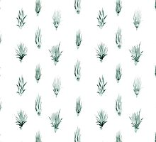 Air Plants by Vicky Webb