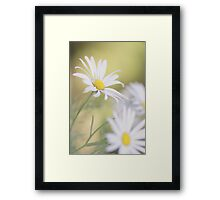 Softly Softly - white daisies Framed Print