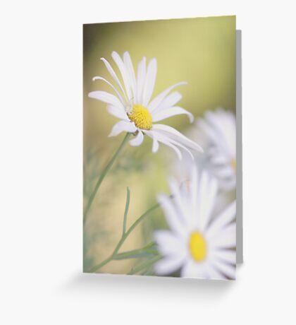 Softly Softly - white daisies Greeting Card