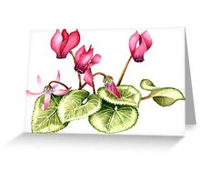Cyclamen persicum - watercolour  Greeting Card