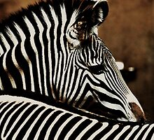 The beauty of stripes by Alan Mattison