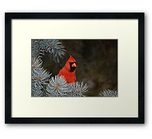Male Northern Cardinal - Ottawa, Ontario Framed Print
