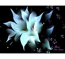 THE SPLENDOR OF A FLOWER! Photographic Print