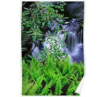 Ferns and Laurel Poster