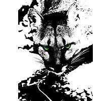 Puma Stare Photographic Print