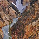 Grand Canyon of the Yellowstone by Luann wilslef