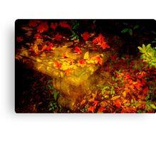 Spring or Autumn? Canvas Print
