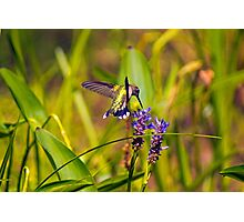 On The Fly Photographic Print