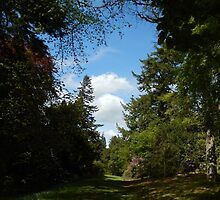 View at Dawyck Gardens, late May by Babz Runcie