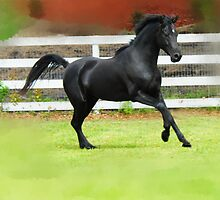 Black Arabian Stallion  by Beatriz  Cruz