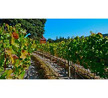 Anderson Valley Photographic Print