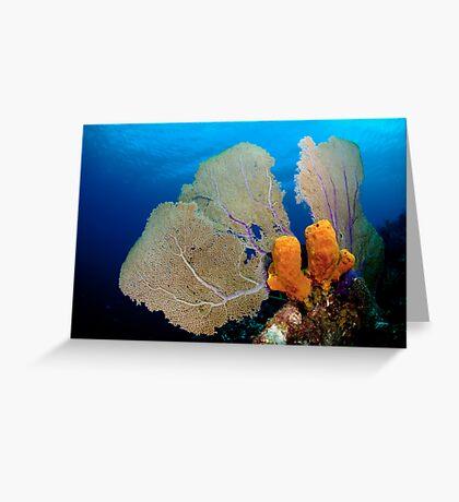 Yellow Sponge & Fan coral symmetry Greeting Card