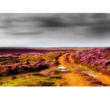 On The Moors Photographic Print