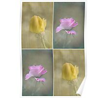 Pink and yellow textured roses Poster