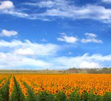 Sunflower Fields - Free State, South Africa Sticker