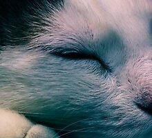 Sleeping Nando by dgermano