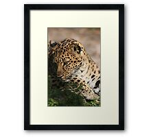 Beauty In The Eyes Framed Print