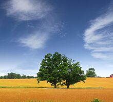 Scenic Landscape In Wheat Fields by snehit
