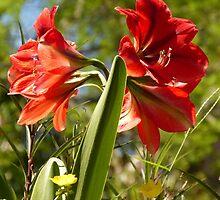 flower - flor by Bernhard Matejka