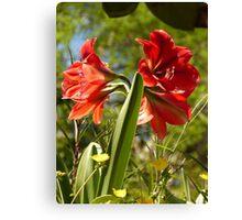 flower - flor Canvas Print