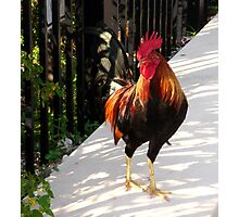 The Red Rooster in Key West, FL Photographic Print