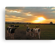 The Herd at Sunset Canvas Print