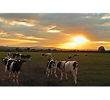 The Herd at Sunset Photographic Print