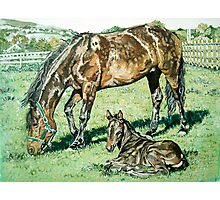 Horse and Foal portrait by artist Debbie Boyle db artstudio Photographic Print