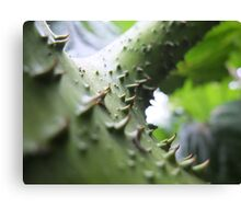 Thorny junction Canvas Print