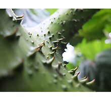 Thorny junction Photographic Print