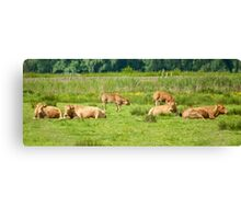 Cows on a field  Canvas Print