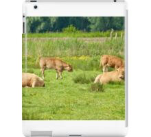 Cows on a field  iPad Case/Skin