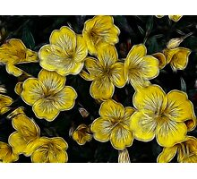 Golden Twinkle Photographic Print