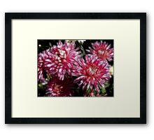Flower Feathers Framed Print