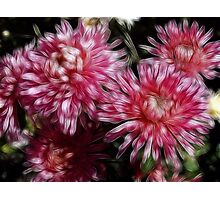 Flower Feathers Photographic Print