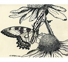 Dotted Butterfly Photographic Print