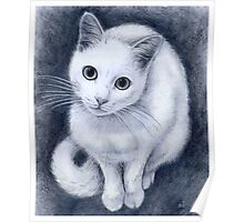 White kitty Poster