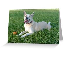 Life's a Ball...!! Greeting Card