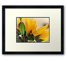 Beautiful Sun Flower Framed Print