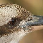 Kookaburra Up Close and Personal by Chris Kiely