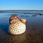 Cape Cod Golf by Christopher Seufert