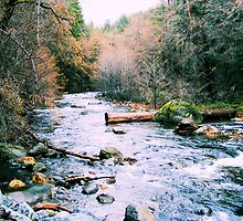 Lassen County Creek by NancyC